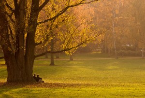 getty_rf_photo_of_two_people_talking_under_tree